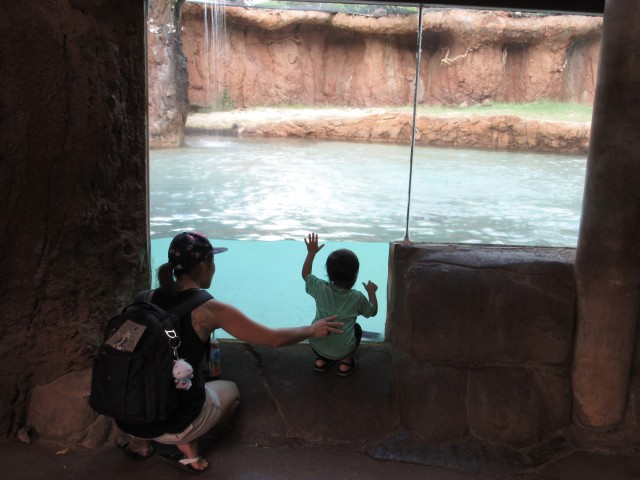 Kristen Miyamoto and her two-year-old son watch as penguins swim by the viewing glass.