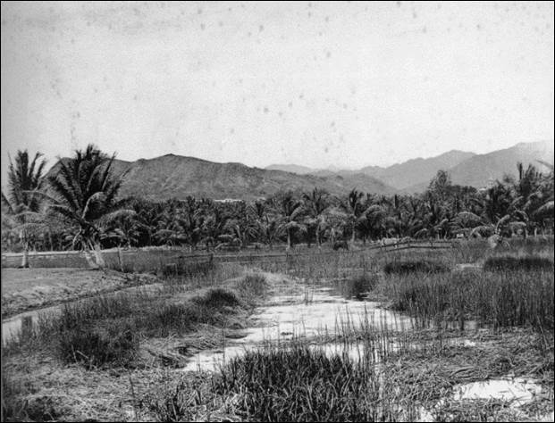 "Before the auwai was encased in concrete, it flowed openly on the Ward family's ""Old Plantation"" estate. This 19th century photo shows a view north towards Punchbowl."