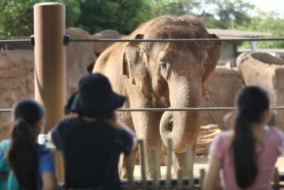 Honolulu Zoo Indian Elephant visitors enjoy the exhibit. 21 nov 2016
