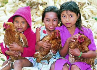 The gift of livestock can help a needy family.
