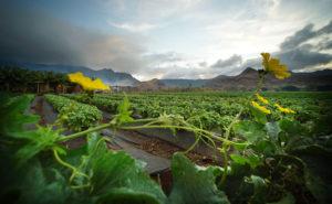 Hawaii Expands Voluntary Pesticide Reporting Program