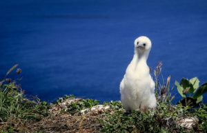 Lehua Island Is Finally Free Of Rats, Scoring A Big Win For Native Seabirds