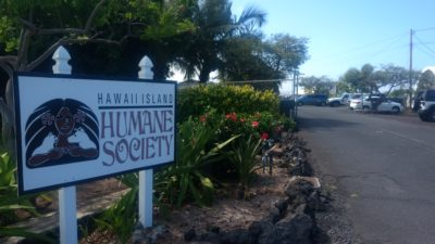 Big Island: Critics Say County Ignores Animal Shelters' High Kill Rates