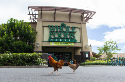 Sterling Higa: How Whole Foods Lured Me In