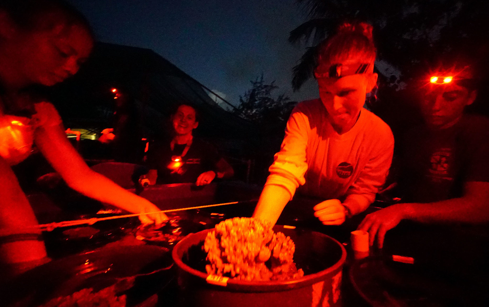 <p></noscript>Volunteers at the Hawaii Institute of Marine Biology wear red head lamps as they prepare for the coral to spawn. The white light affects the mitochondria in coral, making them think it is daytime.</p>