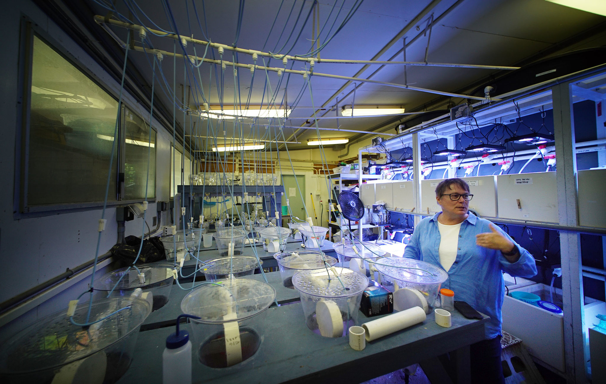 "<p></noscript>Ruth Gates, who heads the Hawaii Institute of Marine Biology, is conducting ""assisted evolution"" experiments with corals.</p>"