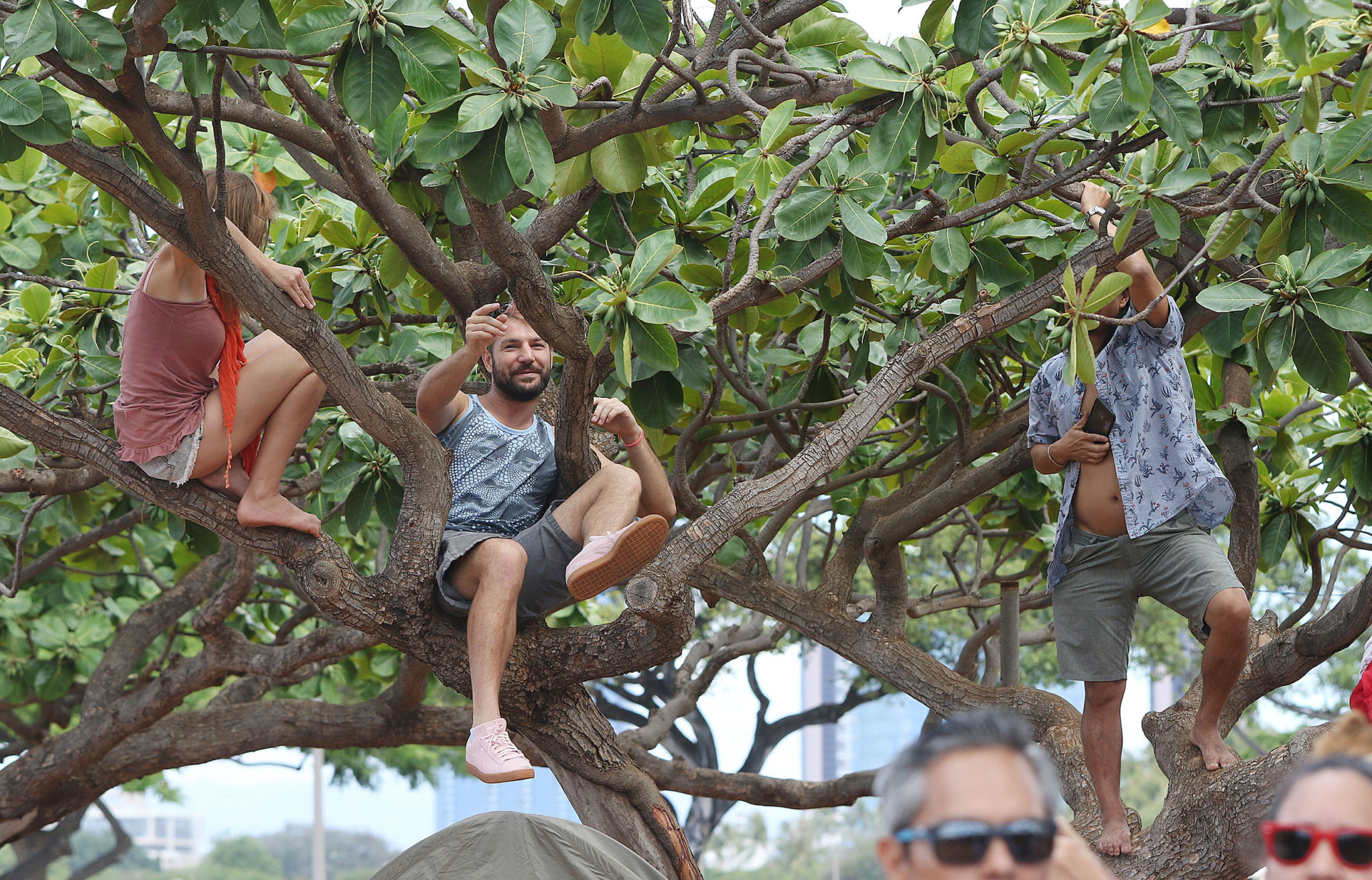 <p>Some people take to the trees to get a better view of Hokulea's approach. / Cory Lum</p>