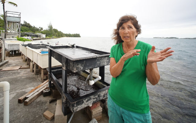 Kuulei Rodgers stands with a view of the UH Environmental Monitoring Lab at Coconut Island.