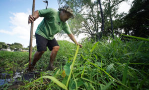 One Man's Quest To Revive A Forgotten Kalihi Park