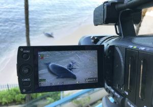 Watch: Live Webcam Of A Monk Seal Mom And Her Newborn Pup On A Waikiki Beach