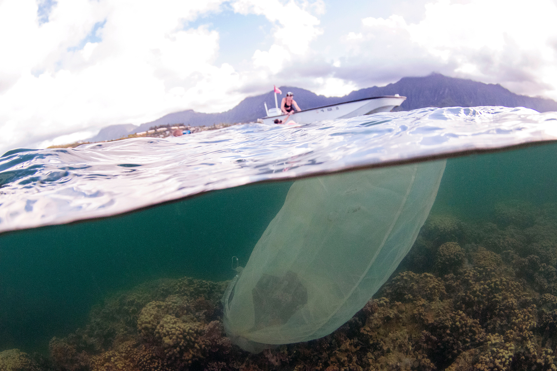 <p></noscript>Scientists have attached fine mesh nets to healthy coral heads in Kaneohe Bay to collect the spawn so they can breed super corals.</p>