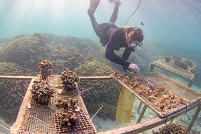 $1 Million Grant Keeps 'Super Coral' Research Alive