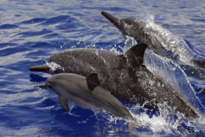 Hawaii Tour Operator Gets Rare Fine For Harassing Dolphins