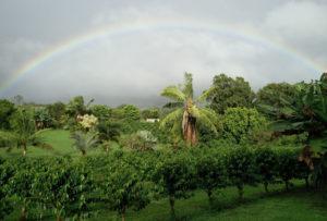Retail Shops On Hawaii Farmland: Kauai Dispute Could Set A Precedent
