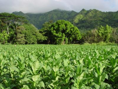 Kauai Finally Greenlights Retail Shops On Farmland