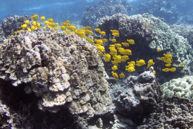 End The Trafficking Of Hawaii's Reef Wildlife