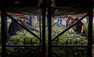 Marijuana Decriminalization Measure Passes Final Vote