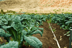 Food Self-Sufficiency Doesn't Have To Damage Environment