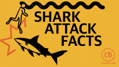 Shark Attack Facts