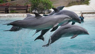 Sea Life Park Aloha Naia Dolphin Show.