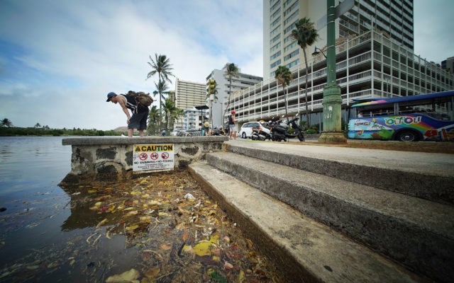 Person peers over the bank of the Ala Wai Canal during a high tide at 3pm at the same time that Hurricane Hector was skirting south of the Hawaiian Islands. If Hurricane Hector hit Oahu, this compounded w/ the King TIde could have devastated and flooded Waikiki. 9 aug 2018