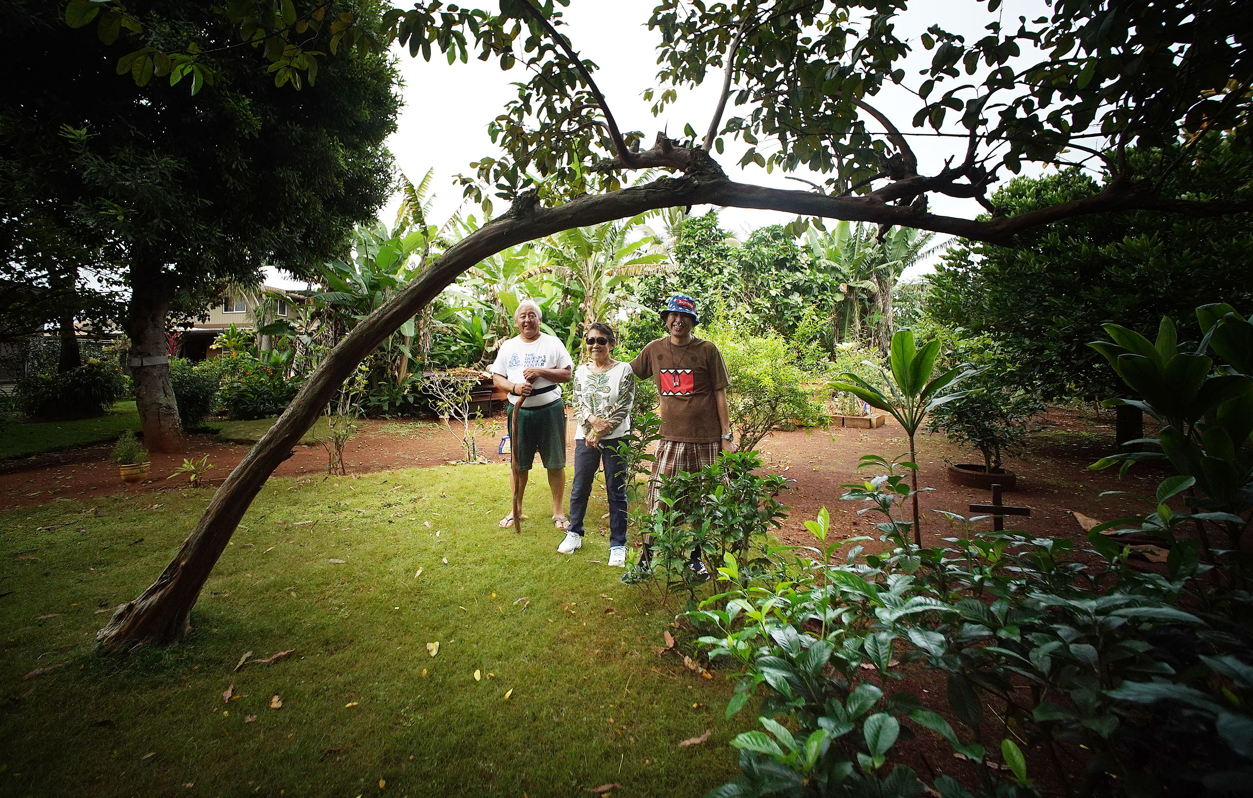 Dennis Nonaka stands with Guava tree his mom planted on their property in Whitemore Village.