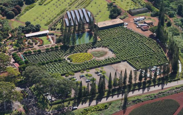 Pineapple Garden Maze Dole Plantation Aerial.