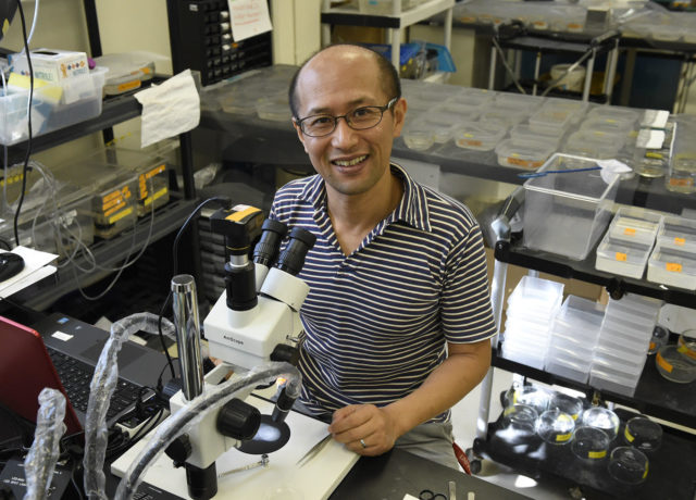 Masato Yoshizawa in his science laboratory at the UH Manoa campus in Honolulu, HI, Tuesday, November 13, 2018. Yoshizawa is studying cave fish in hopes of finding new treatments for humans with autism through his research with the fish. Civilbeat Photo Ronen Zilberman.