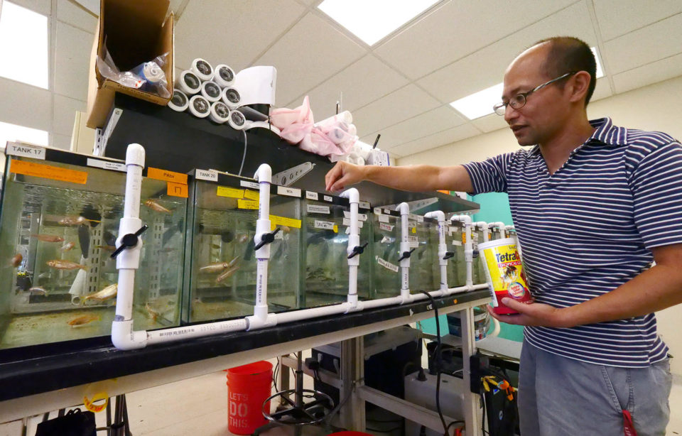 Hawaii Scientists Are Learning A Lot About Autism From Blind Cave Fish