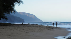 Kauai: On A Now Empty Beach, Signs Of Nature's Comeback