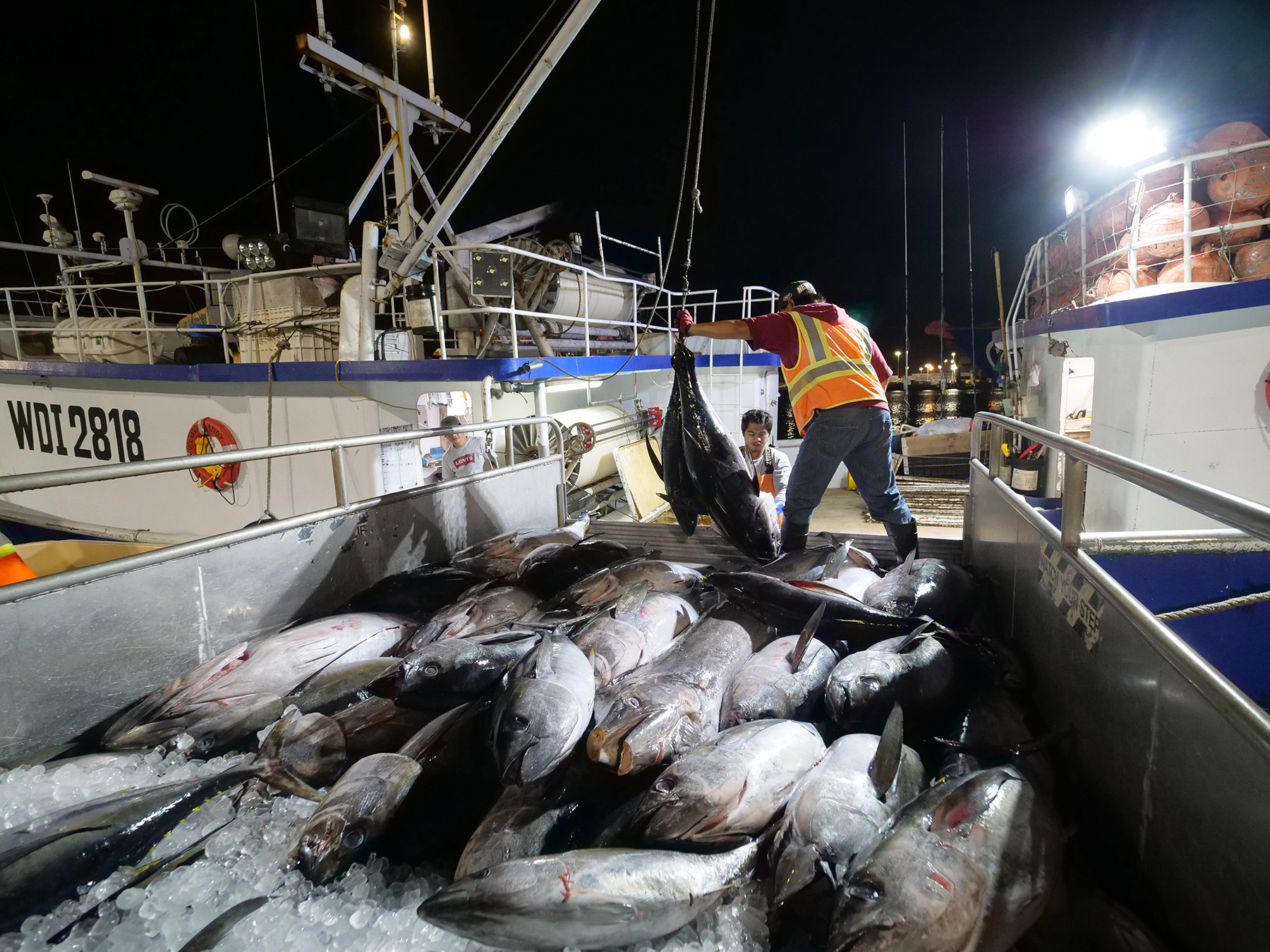 The day starts early Pier 38 where fishermen can be found six days a week unloading their fresh catches of fish to be sold at the Honolulu Fish Auction. The fish are sold same day to buyers in a competitive bidding environment. (Civil Beat photo Ronen Zilberman)