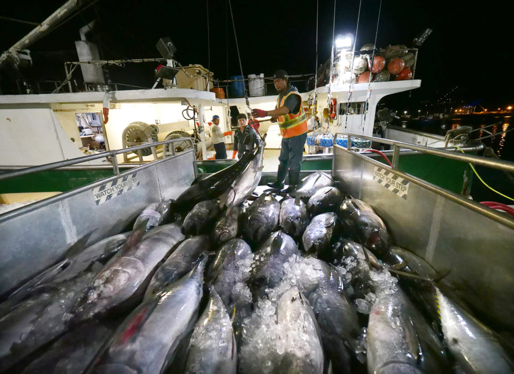 Conflicts, Lax Oversight Shroud This Secretive Fisheries Fund
