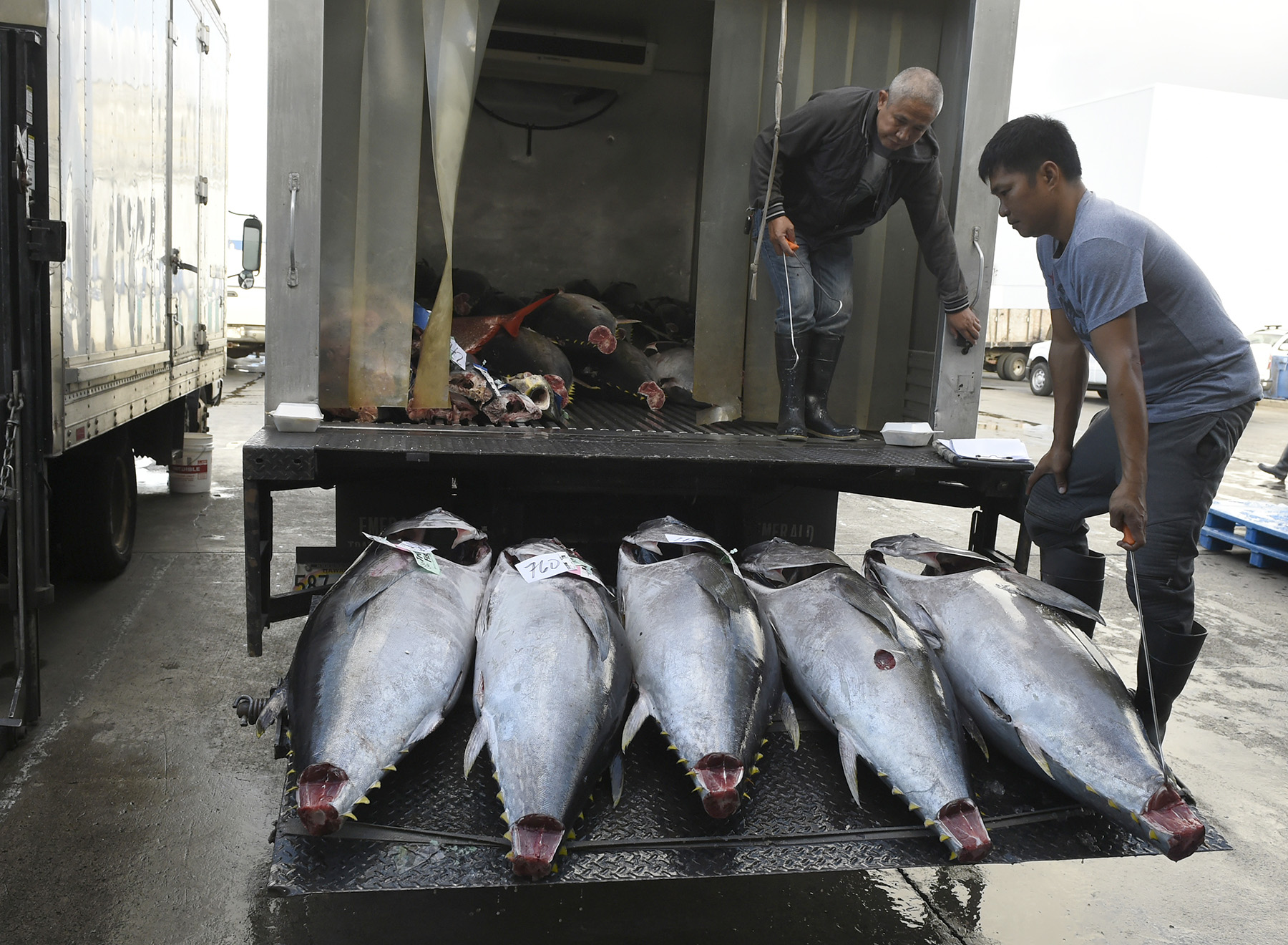<p>The ahi journey continues as fish just sold at auction are loaded into trucks for transport to their final destinations.</p>