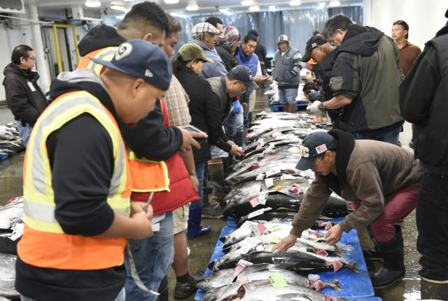 Wholesale, retail, and restaurant sector buys gather around rows of ahi to place their bids at the Honolulu Fish Auction Tuesday, November 20, 2018. The competitive open bidding process lasts each day until every fish is sold. (Civil Beat photo Ronen Zilberman)