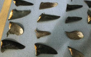 Japanese Boat Owners Charged With Helping To Smuggle Shark Fins