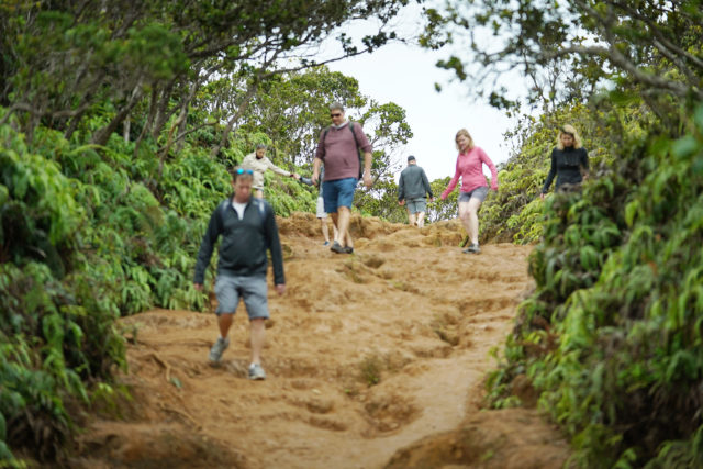 Kauai visitors hike on a muddy slope Kokee Kauai.