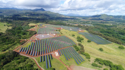 Kauai: World's Biggest Solar Power Plant Relies On A Flock Of Sheep