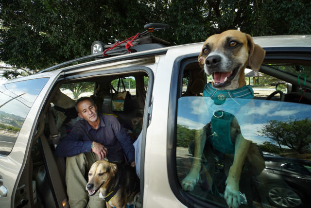 Francis Dornfried sits inside his van with his dogs at a small parking lot off of Diamond Head Road.