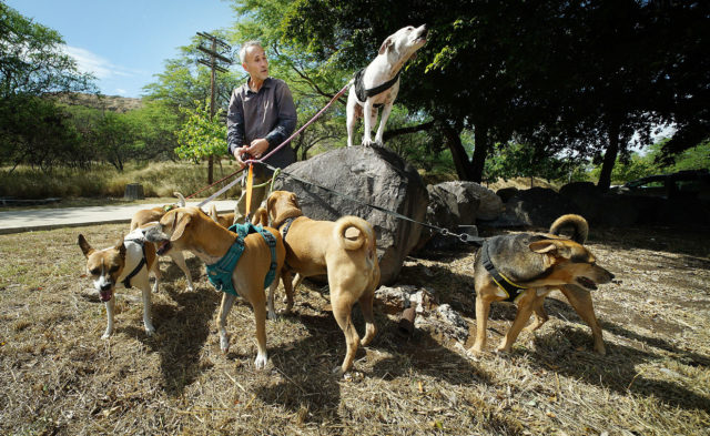 Francis Dornfried walks his dogs near Diamond Head.. Dornfried lives with his dogs in a van.