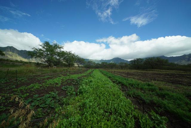 Kahumana Organic Farm Cafe Farm Waianae.