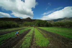 Growing Our Own: Hawaii Still Lacks Enough Local Food Production
