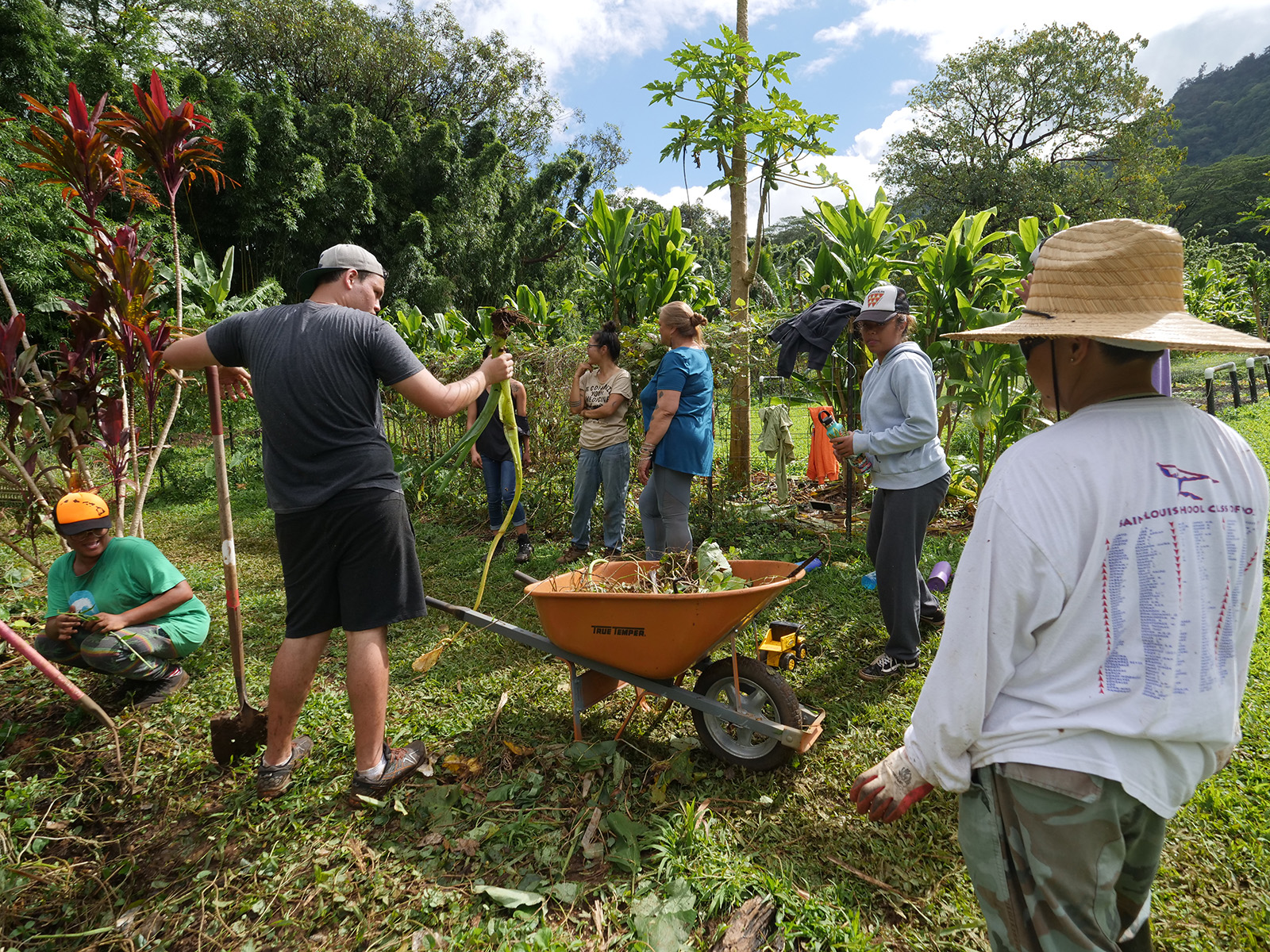 <p>Volunteers converge on Ho'oulu Aina garden for community work days every Wednesday and Thursday. Kokua Kalihi Valley employs 180 people fluent in 20 Asian and Pacific Island languages and dialects working out of nine locations.</p>