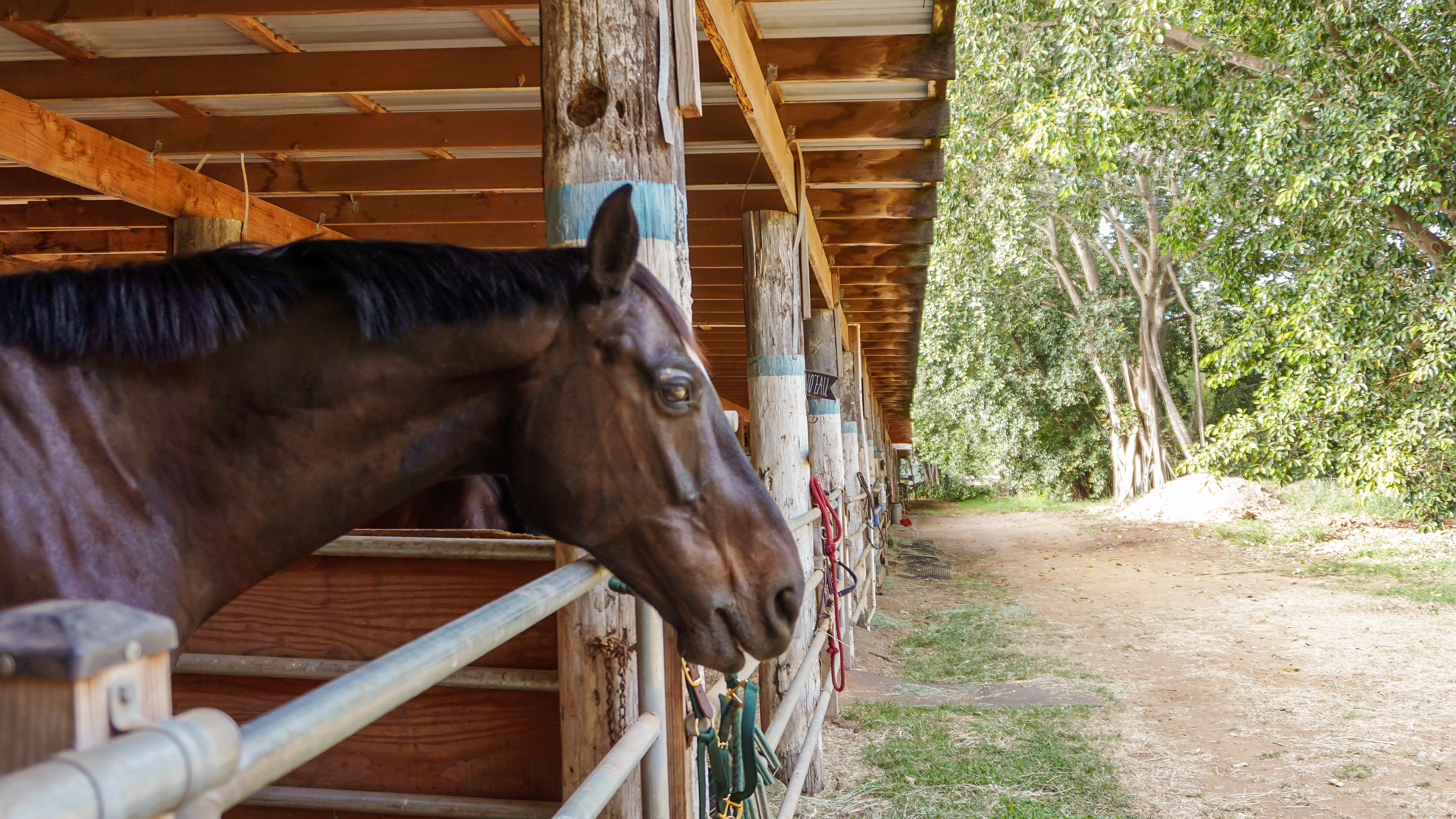 A 'Vicious' Battle Over The Future Of Koko Crater Stables