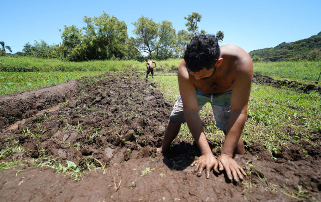 Young adults dig and rebuild a taro patch or lo'i at Ed Wendt's taro patch in Wailua, Maui. Hana.