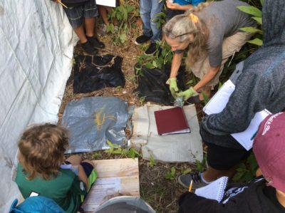 Big Island: Researchers Battle The Rat Lungworm Problem