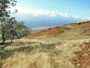Tom Yamachika: DLNR Considers Carbon Credits For East Maui