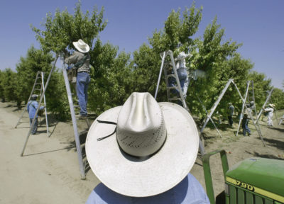 California Set To Ban Pesticide Blamed For Harming Child Development