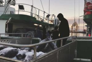 Report: Vulnerabilities Mar Hawaii's Longline Fishing Industry