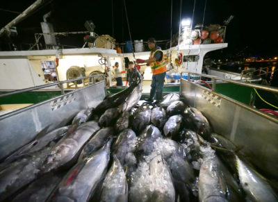 NOAA Keeps Deploying Fishery Observers But With Limits Amid Pandemic