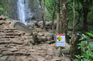 Manoa Falls Trail To Close Part-Time For Work